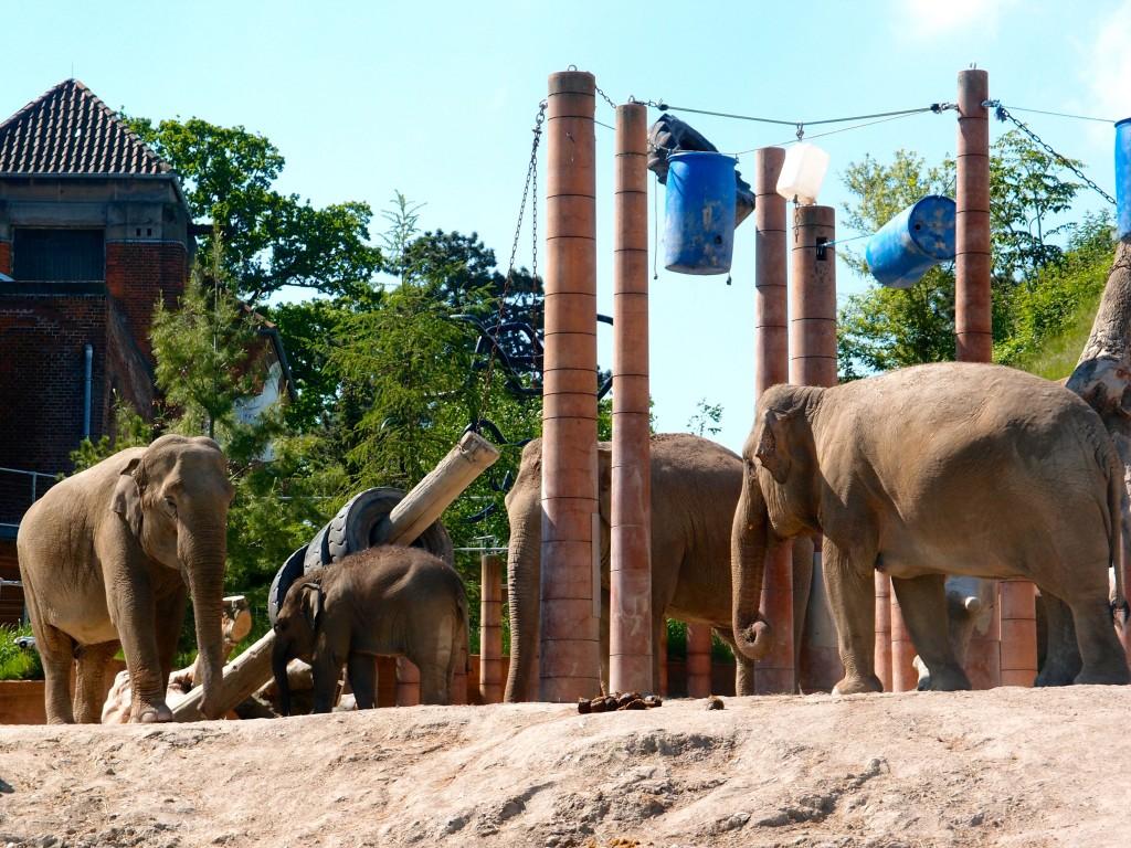 Elephants, Copenhagen, Denmark