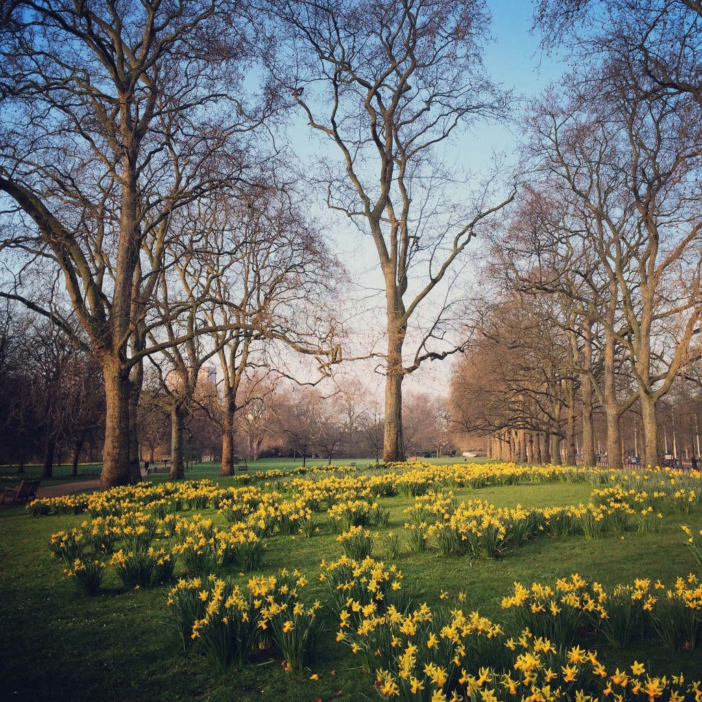 Daffodils, London, England