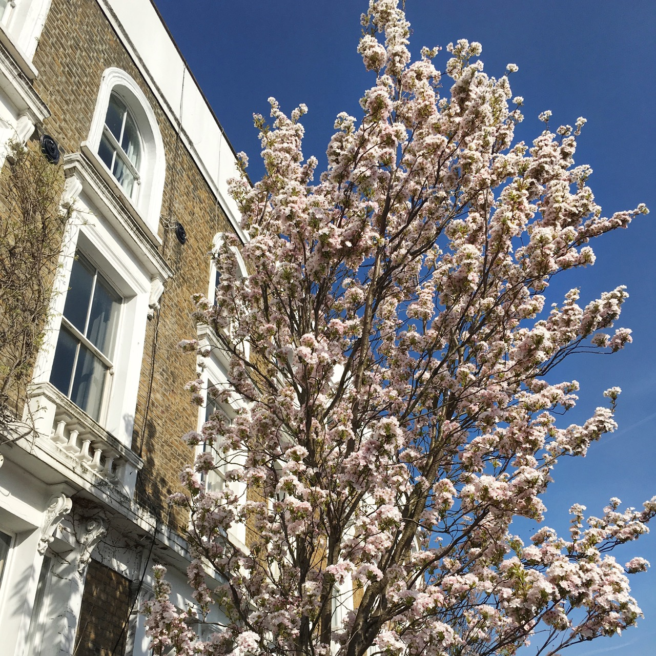 Blossom, Spring, London