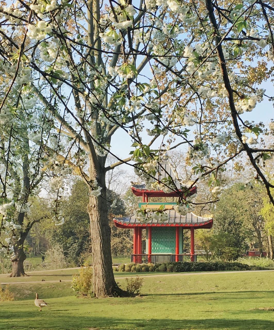 Blossom, Spring, Victoria Park, London