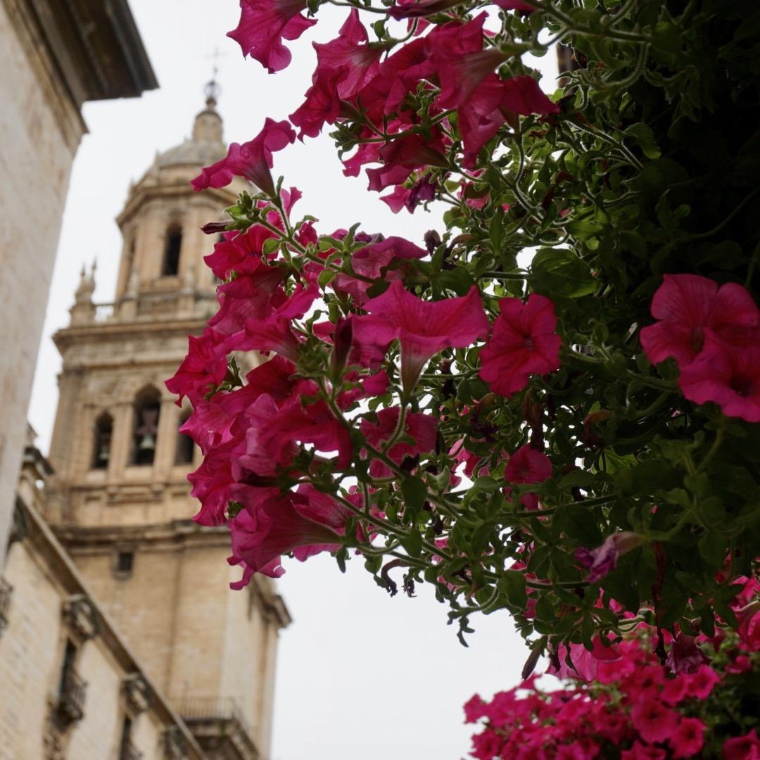 Flowers, Jerez, Spain