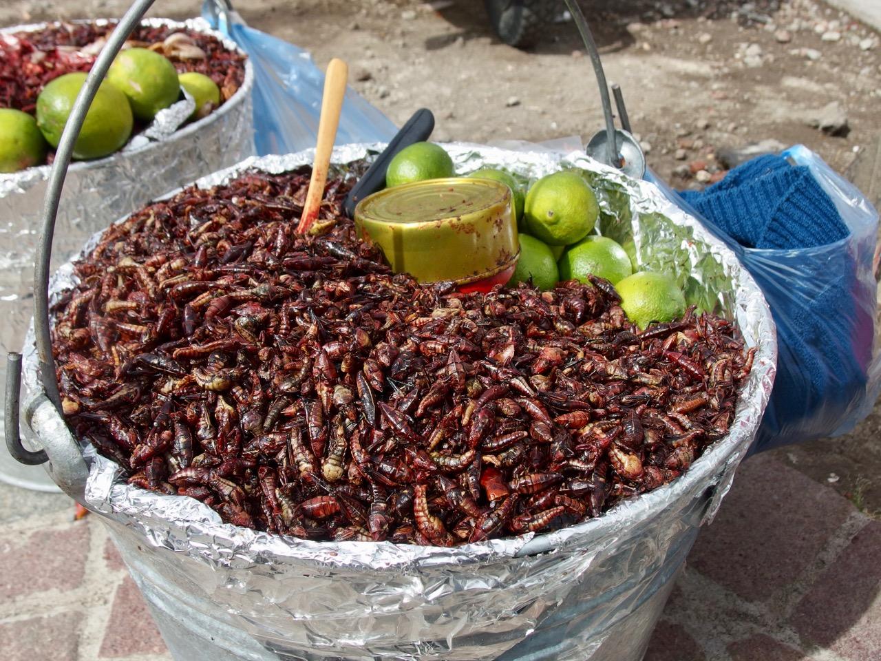 Grasshoppers, Cholula, Mexico
