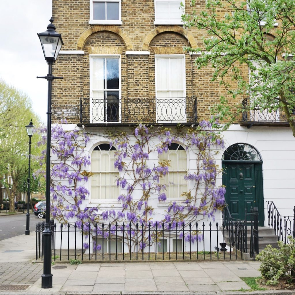 Wisteria, Angel, London